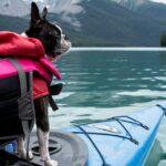 Was Sie beim Kauf einer Schwimmweste für Ihren Hund beachten sollten