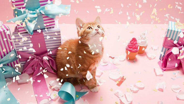 Kätzchen mit Konfetti und Geschenken