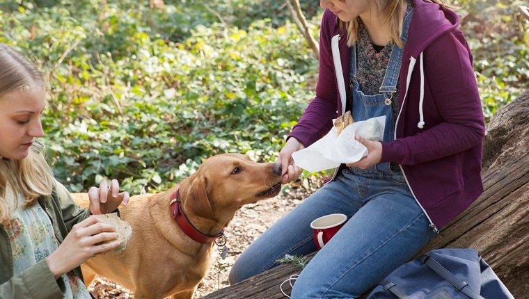 Bringen Sie Wasser und Nahrung mit, um sie mit Ihrem Hündchen zu teilen