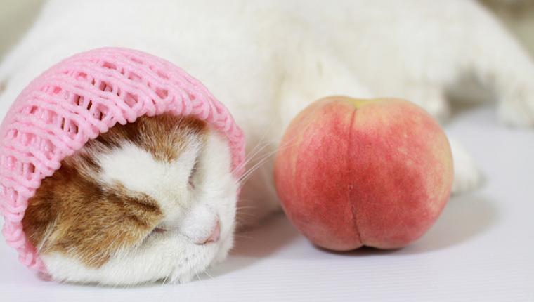 Katze und Pfirsich