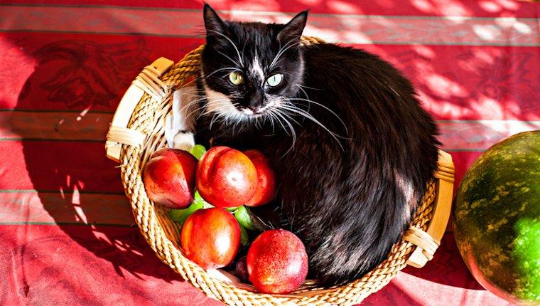 Katze im Korb mit Pfirsichen