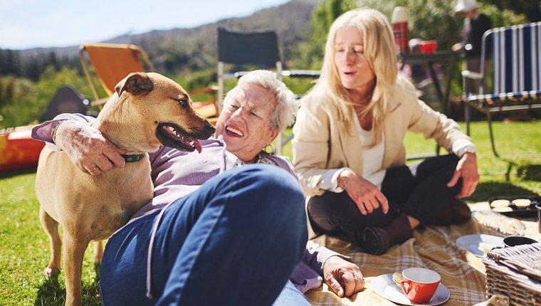 Glückliche aktive ältere Frauen und Hund, die sonniges Sommerpicknick genießen enjoying