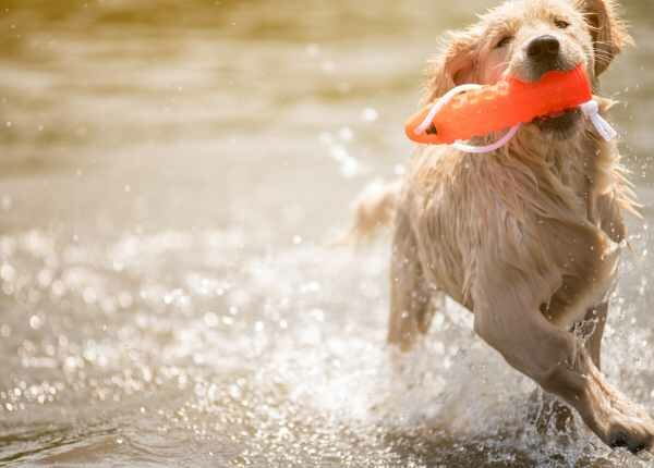 Dog Breed Swimming 1
