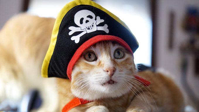 Ingwerkatze mit grünen Augen trägt einen lustigen Cosplay Piraten der Karibik Hut