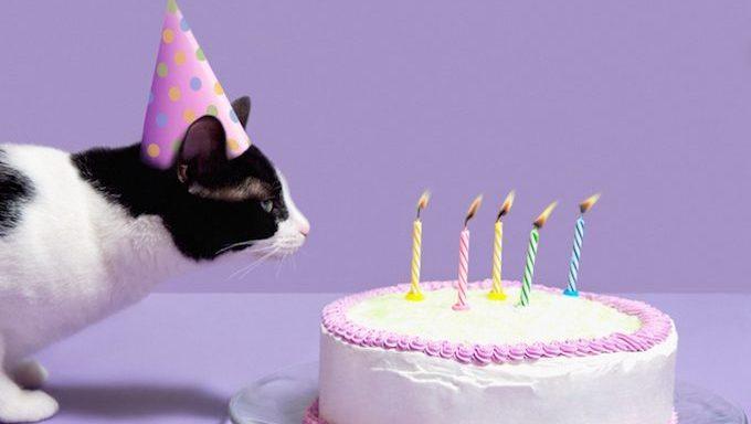 Katze mit Geburtstagshut bläst Kerzen auf Geburtstagstorte aus