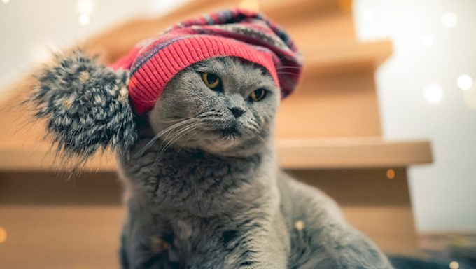 Katze mit Herbst-/Wintermütze