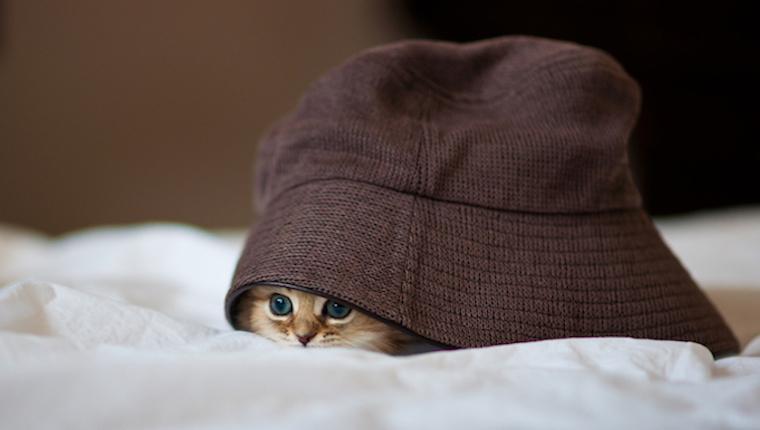 Persisches Kätzchen unter übergroßem Hut auf weißem Blatt.