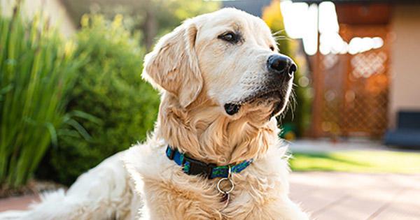 Wie man aggressives Verhalten von Hunden stoppt | Purina