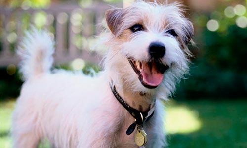 Warum haben Hunde Angst vor Donner?