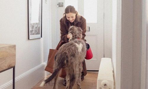 Tipps, um Katzen und Hunde mit Trennungsangst zu trösten